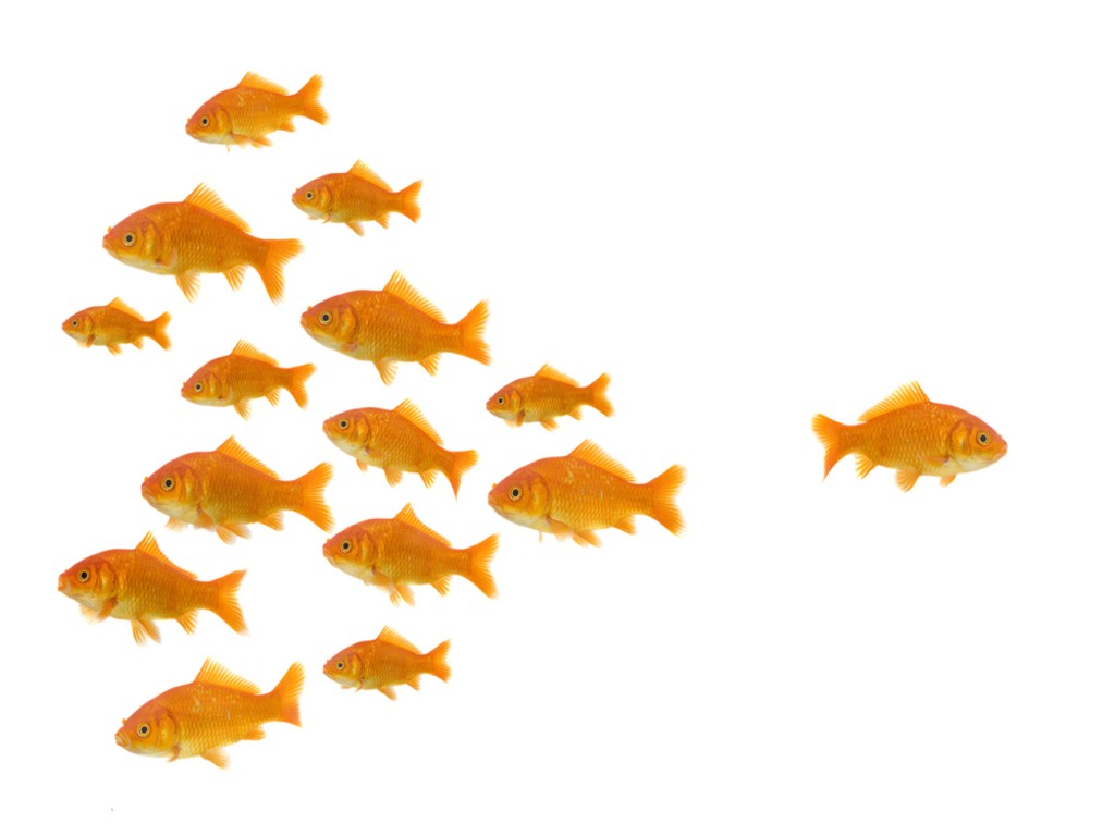 dare_to_be_different_one_goldfish_swimming_the_other_way