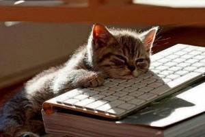 facebook-kedi-bilgisayarda-uyumus-kedi-chatci-kedi-yeni-nesil-kedi