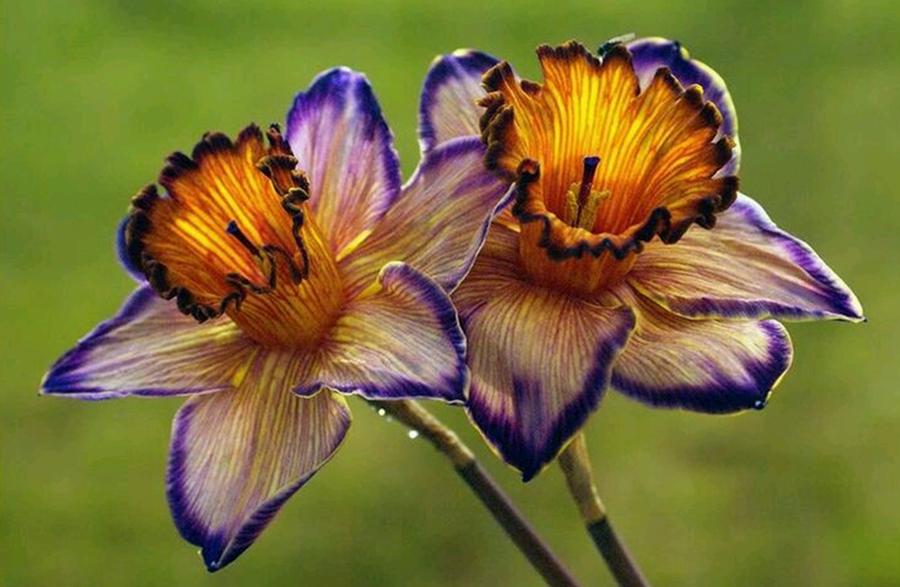 Duygulara Tercüman Çiçekler