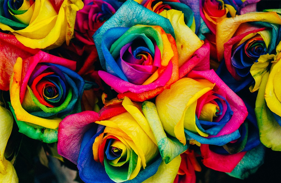 Renklerin Dünyası