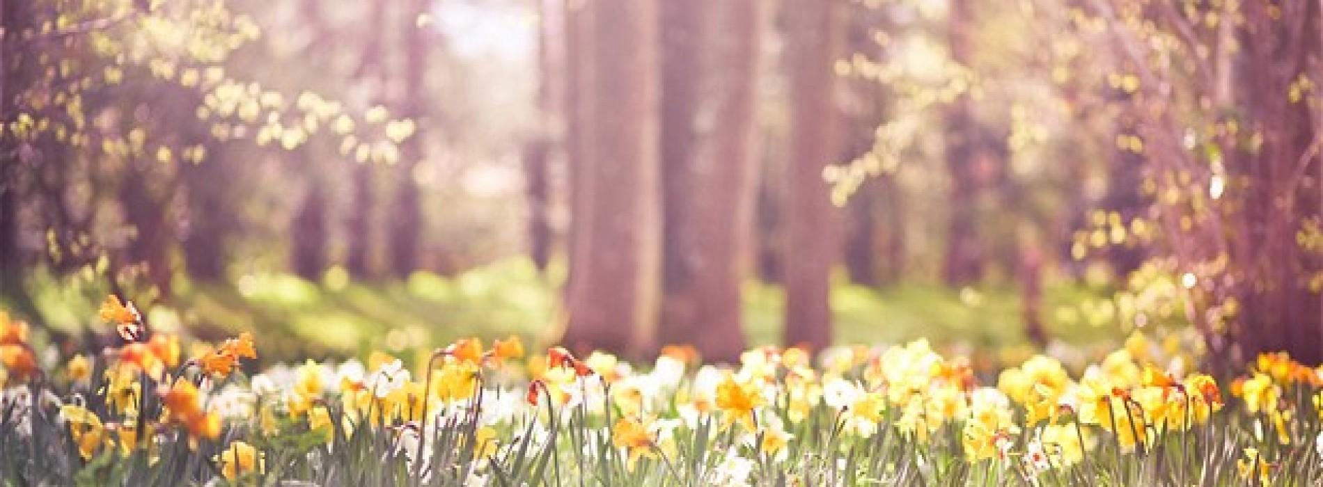 bahar-geliyor